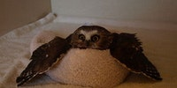 This owl has given up on life.