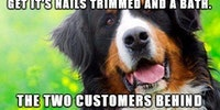 Dog groomer stories