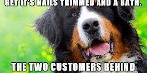 Dog groomer stories