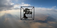 A Japanese Artist Launches Bonsai Into Space