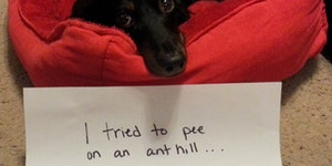 So, I tried to pee on an anthill...