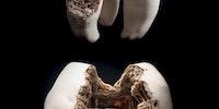 Cavity art.