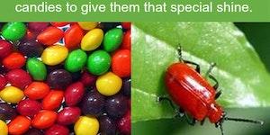 Skittles and Jellybeans.