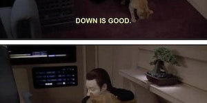 Robots and cats...