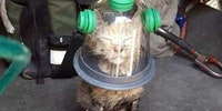 Cat's oxygen mask
