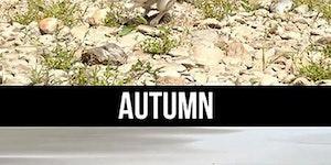Husky Through The Seasons.