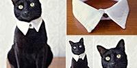 Fancy cat.