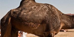 Camel art.