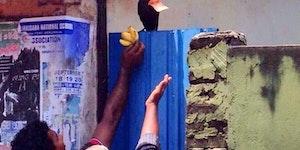 A crow stole 100 bucks... #birdgames