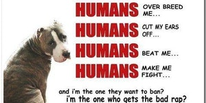 Please help us stop the ban against pit bulls!