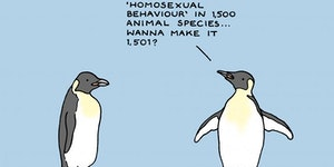 Socially gay penguin