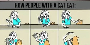 How cat owners eat.