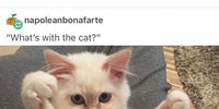 Компиляция кошки