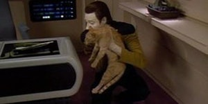 Data, The Cat Whisperer