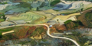 The rice fields of Vietnam look like a Van Gogh painting.