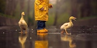 Just a couple of ducks out in the rain...
