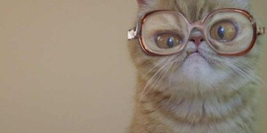 Did you know Bubbles had a cat?