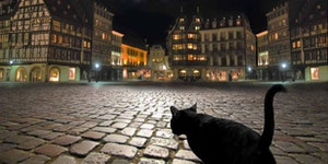 Stray cat in Strasbourg.