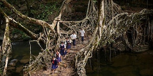 Khasi children cross a bridge grown from the trainable roots of rubber trees.