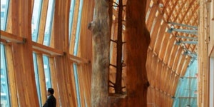 The artist Giuseppe Penone removes the growth rings on a tree to reveal the tree at a younger age
