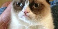 Grumpy cat gets it.