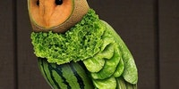 Vegetarian owl.