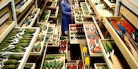 Dead parrot collection at the Smithsonian