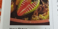 The Venus Flytrap is a badass.