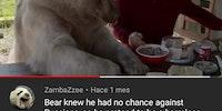 медведь мудр