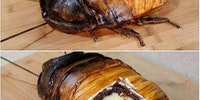 This bug cake is unnerving and probably delicious.