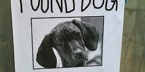 Found dog.