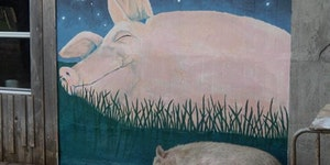 A very Wilbur story.