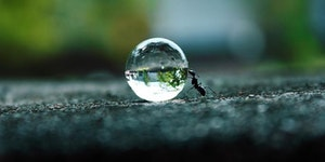 An ant pushing a body of water