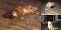 Accidentally order XS dog bed. Good Dog still grateful.