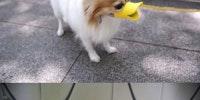 Duckface protective muzzles.