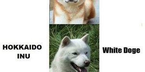 Whenever I see this doge dog