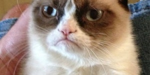Grumpy cat hates your mom, but you already knew that.