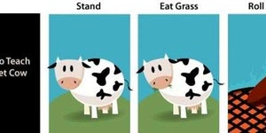 Tricks to teach your pet cow.