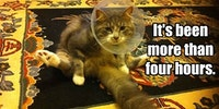 Call the vet...