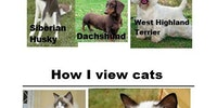 How I view dogs vs. how I view cats.