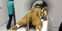 A literal cat scan.