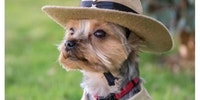 Did you just call me a Bark Ranger?