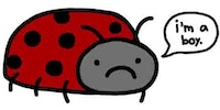 How to upset a ladybug.