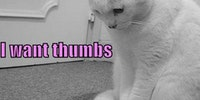 Thumbs. I want thumbs for my birthday...