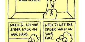 How to cure your arachnophobia.