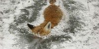 Firefox has frozen.