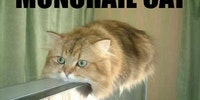Monorail cat.