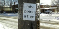 I miss being a tree.