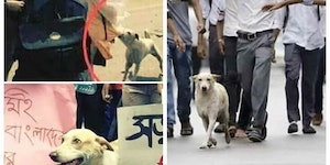 Dog protesting with the students in the streets of Bangladesh