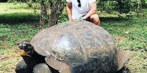 Just a couple of beautiful tortoises'.